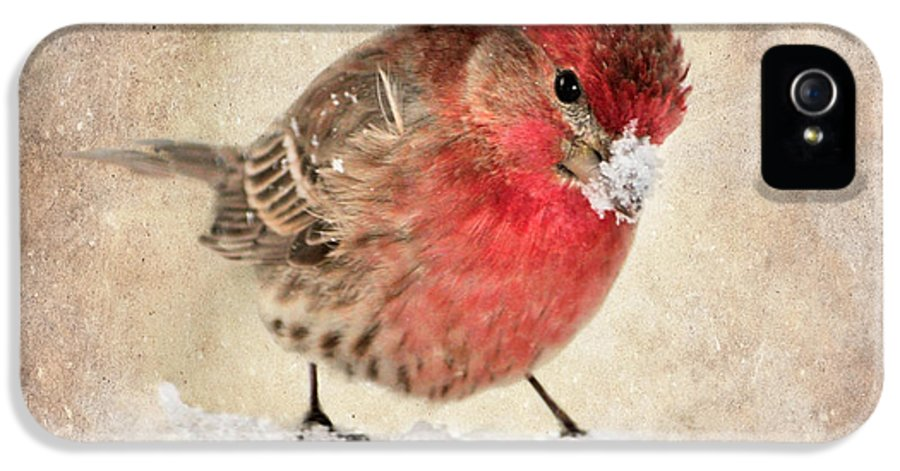 House Finch IPhone 5 Case featuring the photograph Christmas Card 9 by Betty LaRue