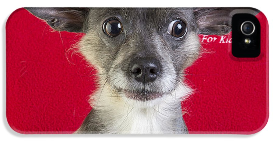 Dog IPhone 5 Case featuring the photograph Christmas Dog by Edward Fielding