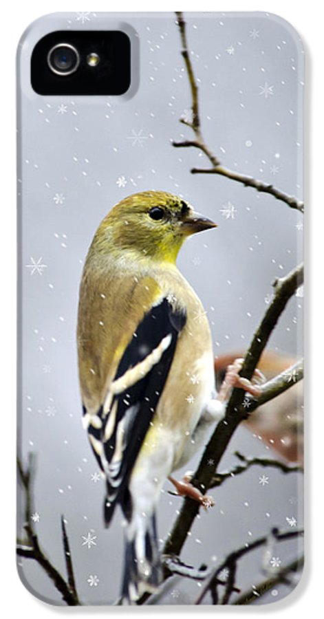 Christmas IPhone 5 Case featuring the mixed media Christmas Goldfinch by Christina Rollo