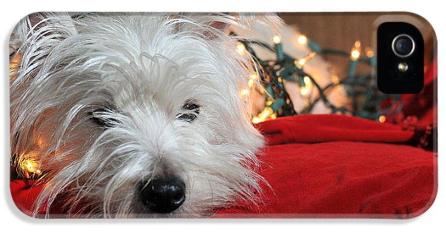 West Highland Terrier IPhone 5 Case featuring the photograph Christmas Westie by Catherine Reusch Daley