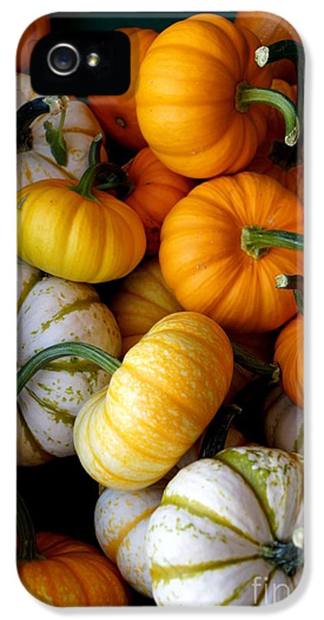 Farm IPhone 5 Case featuring the photograph Cinderella Pumpkin Pile by Kerri Mortenson