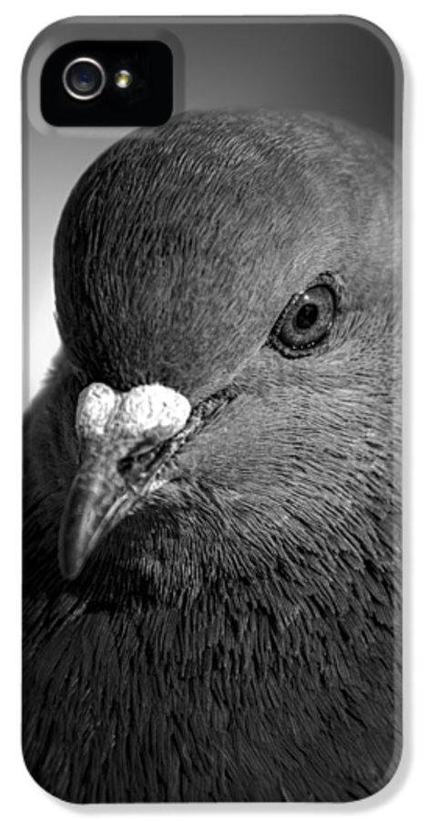 Pigeon IPhone 5 Case featuring the photograph City Bird Gang Leader by Bob Orsillo