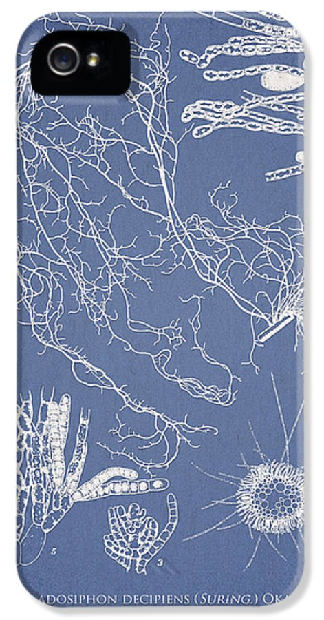 Algae IPhone 5 Case featuring the drawing Cladosiphon Decipiens by Aged Pixel
