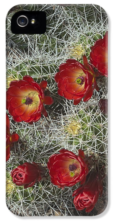 Capitol IPhone 5 Case featuring the photograph Claret Cactus - Vertical by Gregory Scott