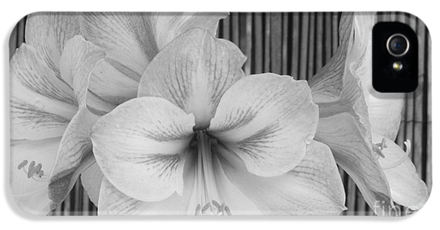 Patzer IPhone 5 Case featuring the photograph Classic Lilies by Greg Patzer
