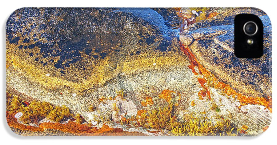 Lichen IPhone 5 Case featuring the photograph Colors On Rock I by Heiko Koehrer-Wagner