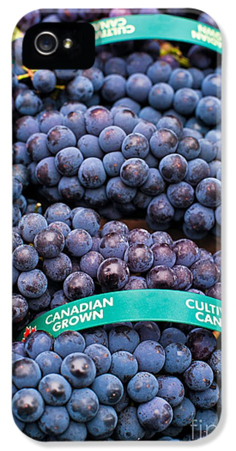 Concord IPhone 5 Case featuring the photograph Concord Grapes by Mary Smyth