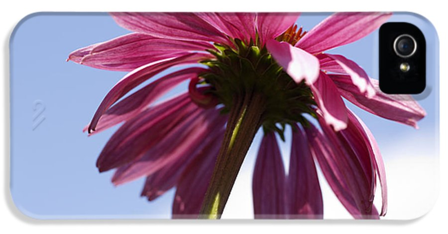 Echinacea IPhone 5 Case featuring the photograph Coneflower by Tony Cordoza