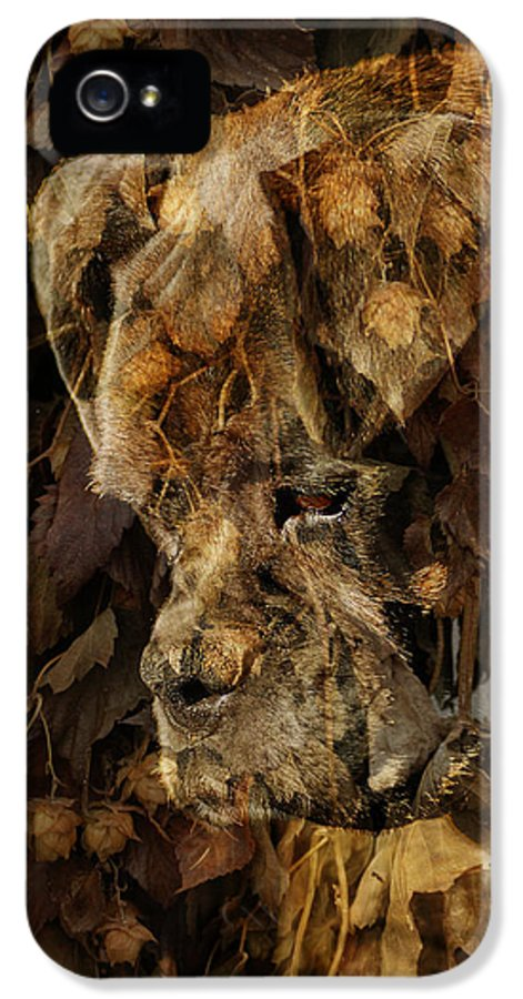 Dog Boxer Dog IPhone 5 Case featuring the digital art Contemplation by Judy Wood