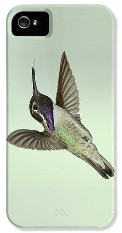 Bird IPhone 5 Case featuring the photograph Costa's Hummingbird - Phone Case Design by Gregory Scott
