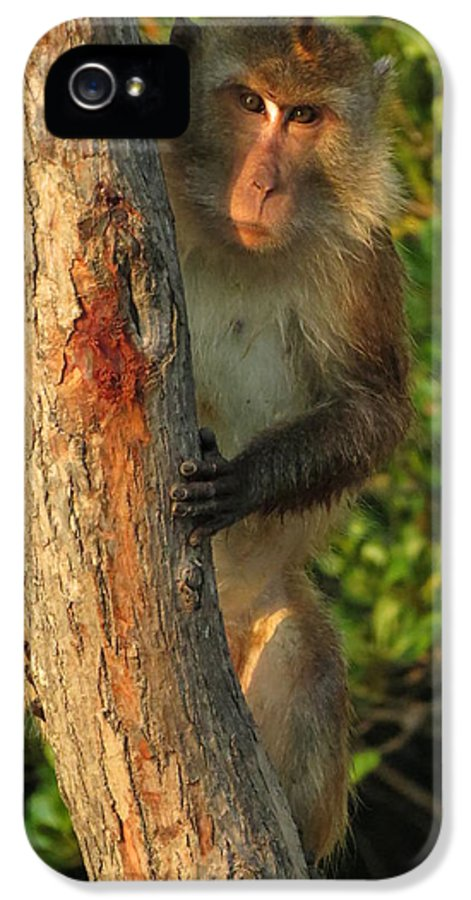 Monkey IPhone 5 Case featuring the photograph Crab Eating Macaque by Ramona Johnston