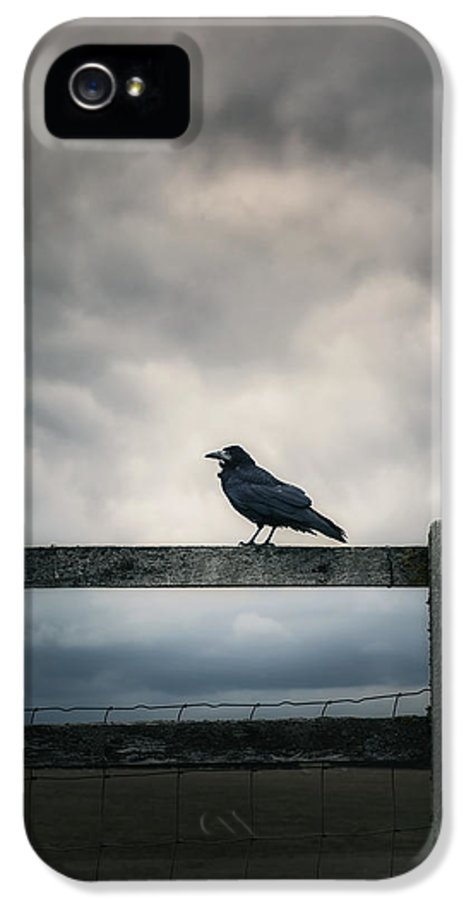 Crow IPhone 5 Case featuring the photograph Crow by Joana Kruse