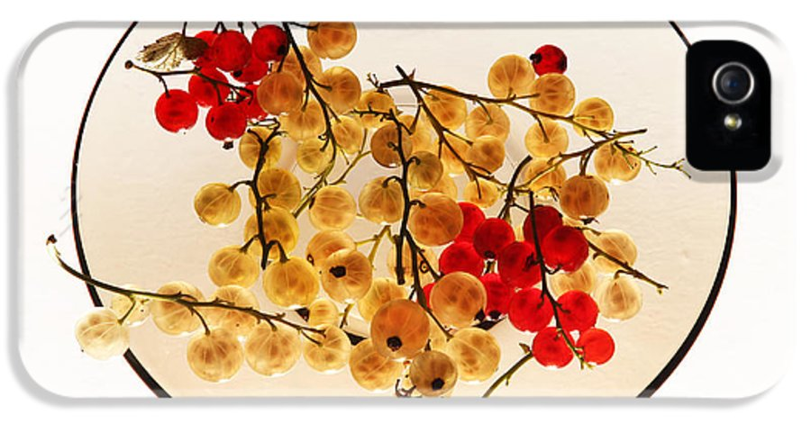 Berry IPhone 5 Case featuring the photograph Currants On A Plate by Vitaliy Gladkiy