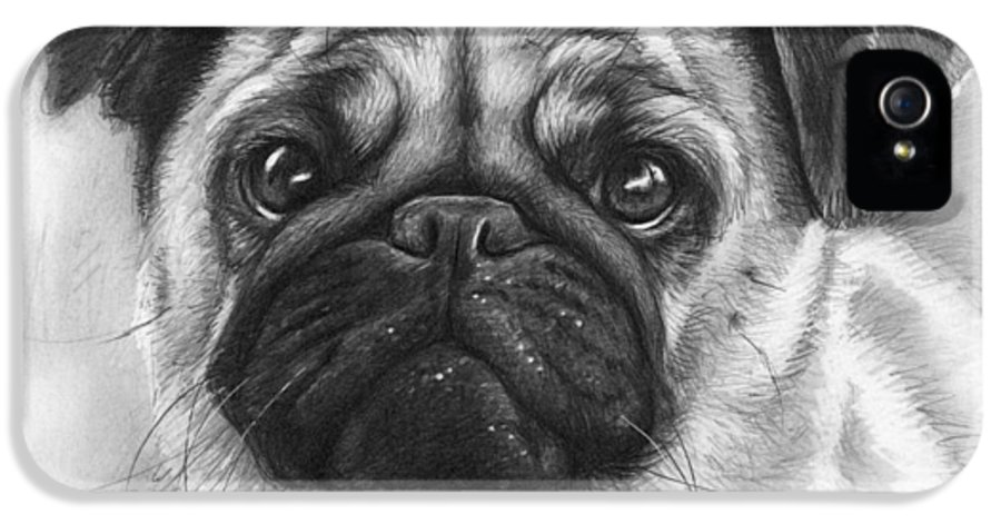 Dog IPhone 5 Case featuring the drawing Cute Pug by Olga Shvartsur