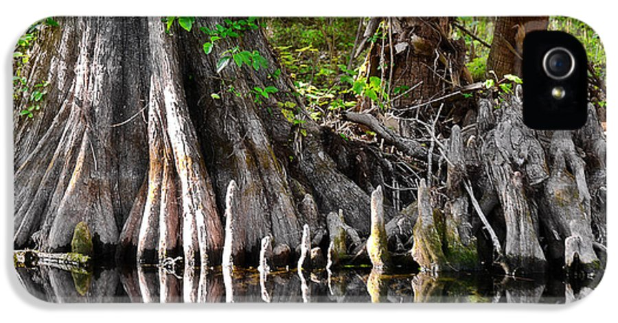 Cypress IPhone 5 Case featuring the photograph Cypress Trees - Nature's Relics by Christine Till
