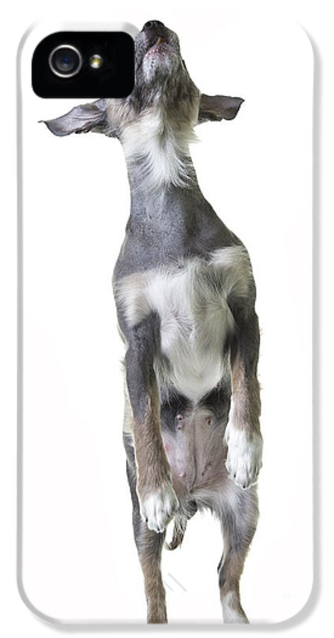 Dog IPhone 5 Case featuring the photograph Dancing Dog by Edward Fielding