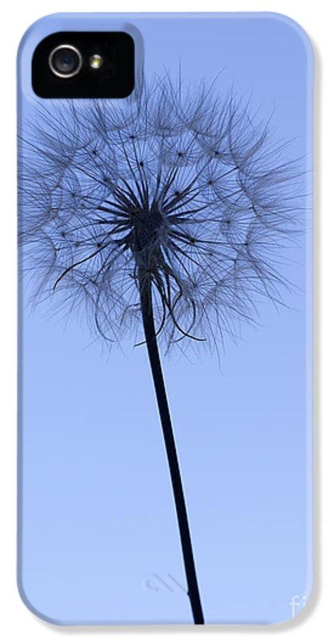 Dandelion IPhone 5 Case featuring the photograph Dandelion by Tony Cordoza