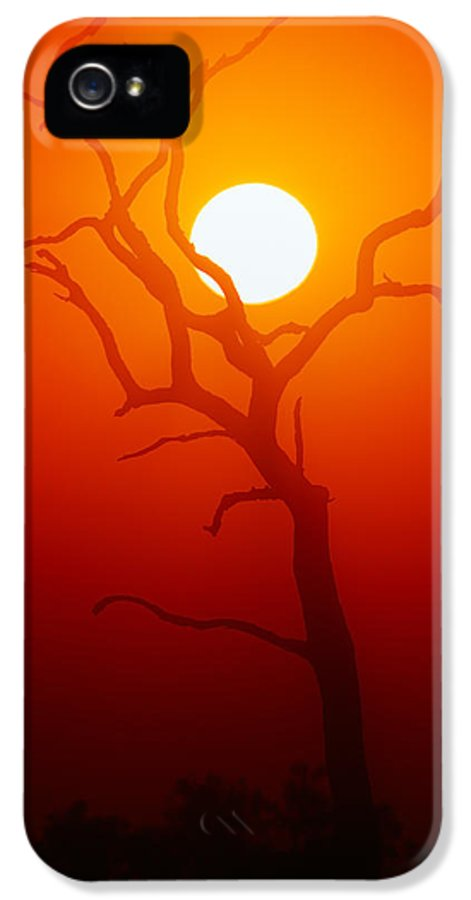 Tree IPhone 5 Case featuring the photograph Dead Tree Silhouette And Glowing Sun by Johan Swanepoel