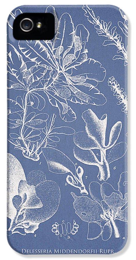 Algae IPhone 5 Case featuring the digital art Delesseria Middendorfii by Aged Pixel