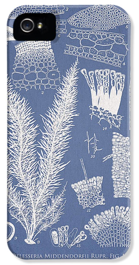 Algae IPhone 5 Case featuring the drawing Delesseria Middendorfii And Chardaria Abientina by Aged Pixel