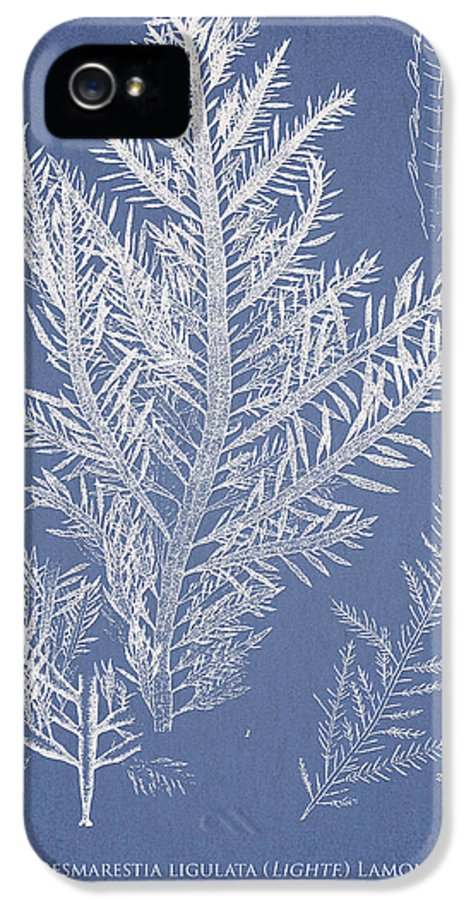 Algae IPhone 5 Case featuring the drawing Desmarestia Ligulata by Aged Pixel