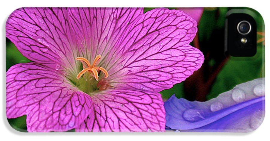 Flower IPhone 5 Case featuring the photograph Details by Rona Black