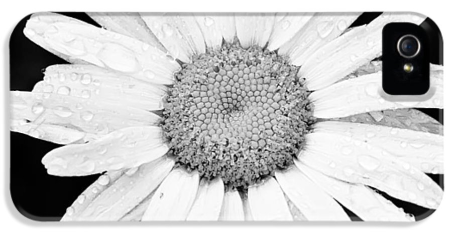 3scape IPhone 5 Case featuring the photograph Dew Drop Daisy by Adam Romanowicz