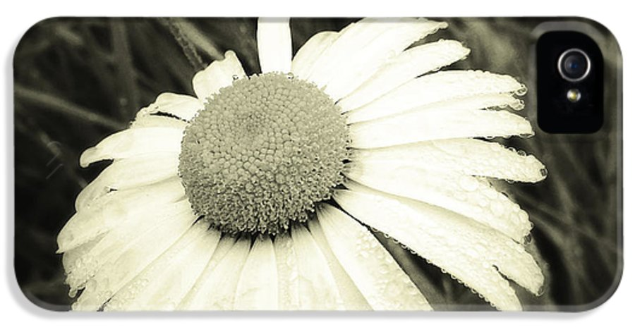 Flower IPhone 5 Case featuring the photograph Dew Drops by Les Cunliffe