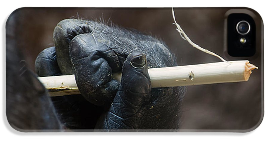 Gorilla Hand IPhone 5 Case featuring the photograph Dexterity by Rebecca Sherman