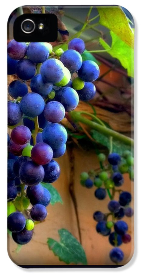 Grapevine IPhone 5 Case featuring the photograph Divine Perfection by Karen Wiles