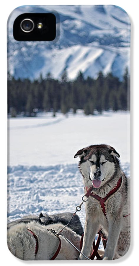 Dogs IPhone 5 Case featuring the photograph Dog Team by Duncan Selby