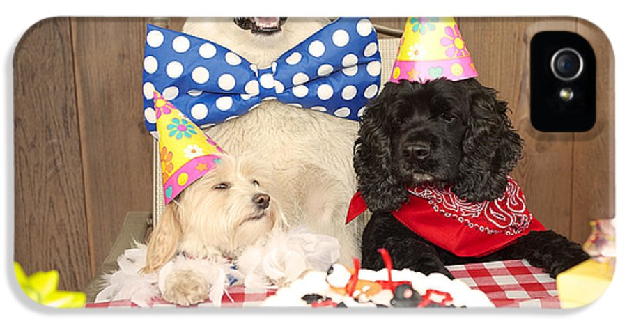 Doggy Birthday Party IPhone 5 Case featuring the photograph Doggy Birthday Party by Jan Tyler