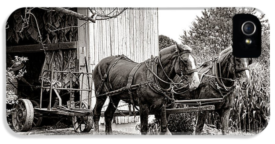Draught IPhone 5 Case featuring the photograph Draft Horses At Work by Olivier Le Queinec