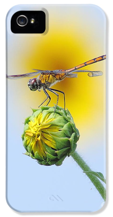 Nature IPhone 5 Case featuring the photograph Dragonfly In Sunflowers by Robert Frederick