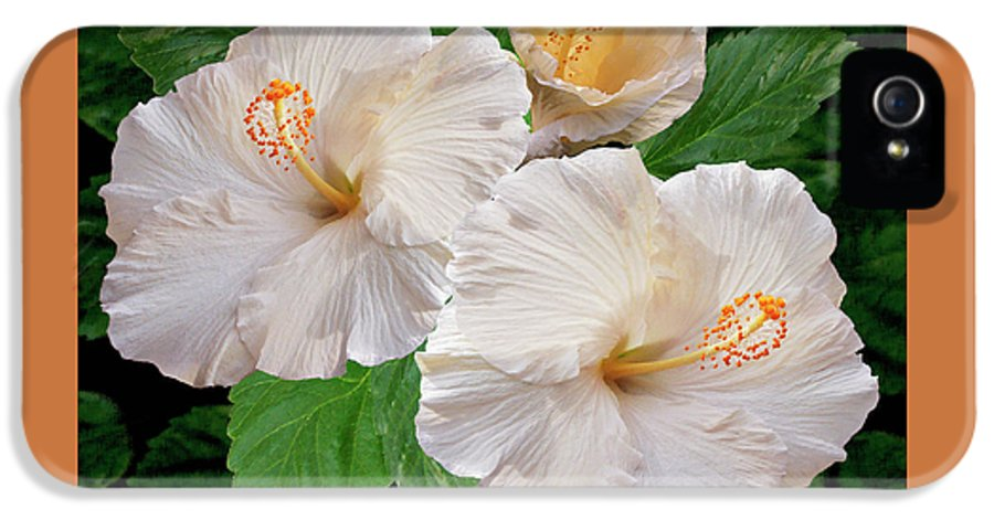 Tropical Flower IPhone 5 Case featuring the photograph Dreamy Blooms - White Hibiscus by Ben and Raisa Gertsberg