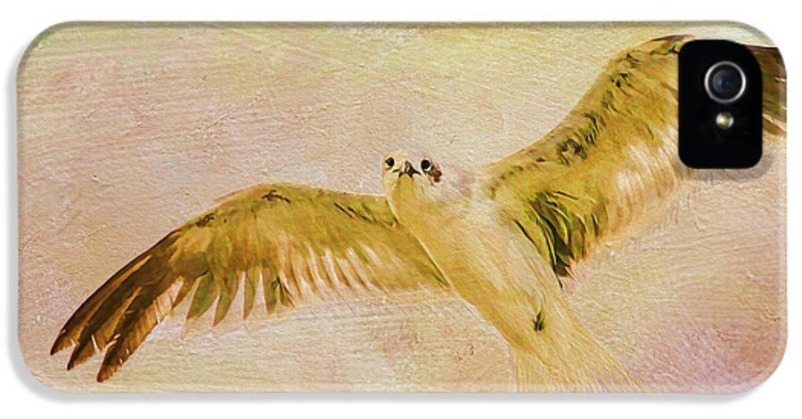 Seagull IPhone 5 Case featuring the photograph Dreamy Flight by Deborah Benoit