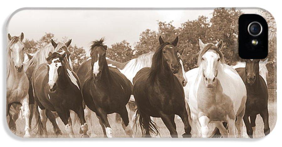 Horse IPhone 5 Case featuring the photograph Duchess Sanctuary Big Herd by Duchess Sanctuary