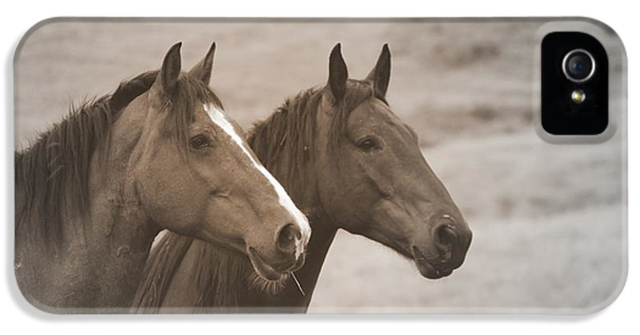 Horse IPhone 5 Case featuring the photograph Duchess Sanctuary Delilah And Monaco by Duchess Sanctuary
