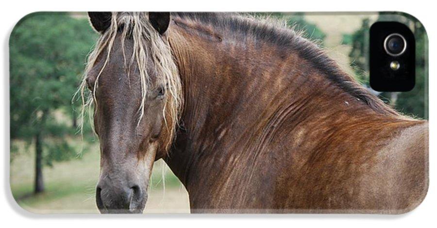 Horse IPhone 5 / 5s Case featuring the photograph Duchess Sanctuary Felina by Duchess Sanctuary