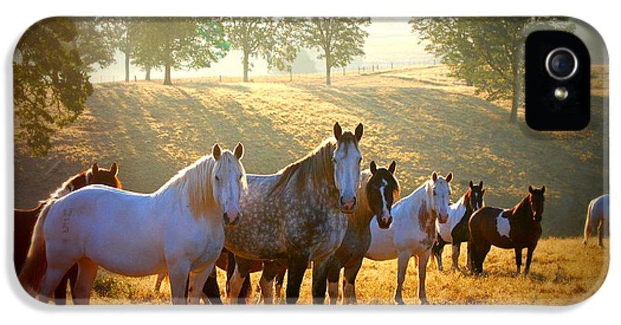 Horse IPhone 5 / 5s Case featuring the photograph Duchess Sanctuary September Sunrise by Duchess Sanctuary