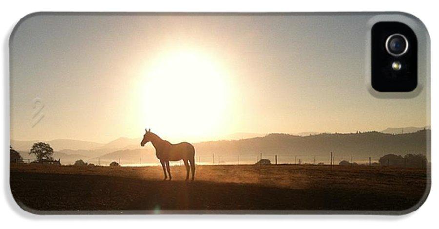 Horse IPhone 5 Case featuring the photograph Duchess Sanctuary Sunrise by Duchess Sanctuary