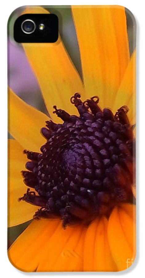 Yellow IPhone 5 Case featuring the pyrography Early Morning Susan by Jennifer E Doll