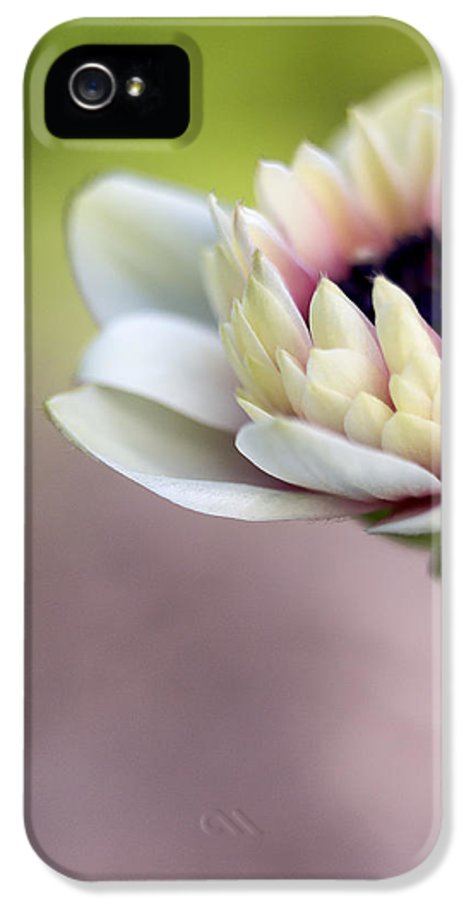 Anemone IPhone 5 Case featuring the photograph Early Spring by Caitlyn Grasso