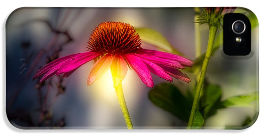 Flower IPhone 5 Case featuring the photograph Echinacea Sunrise by Bob Orsillo