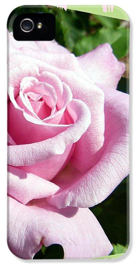 Elegant Royal Kate Rose IPhone 5 Case featuring the photograph Elegant Royal Kate Rose by Will Borden