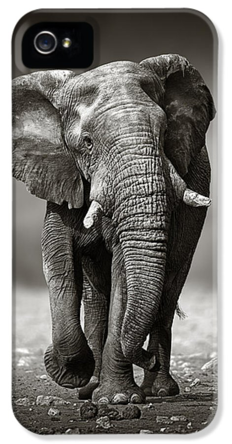 Elephant IPhone 5 Case featuring the photograph Elephant Approach From The Front by Johan Swanepoel