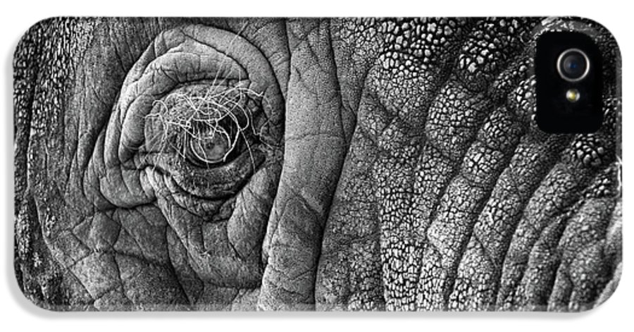 Africa IPhone 5 Case featuring the photograph Elephant Eye by Sebastian Musial