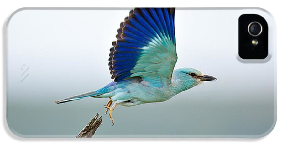 Action IPhone 5 Case featuring the photograph Eurasian Roller by Johan Swanepoel