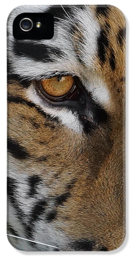Tiger IPhone 5 Case featuring the photograph Eye Of The Tiger by Ernie Echols