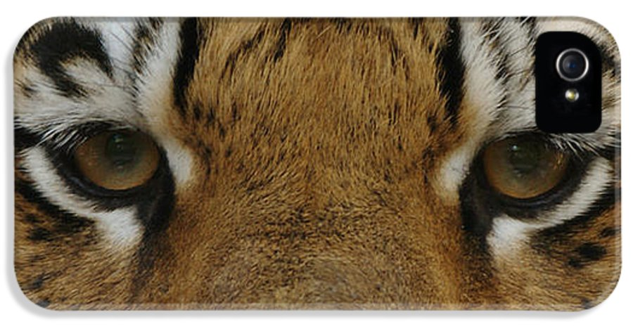 Tiger Eyes IPhone 5 Case featuring the photograph Eyes Of The Tiger by Sandy Keeton